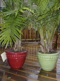 Palmtrees 002
