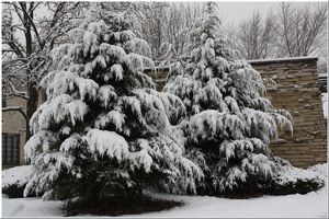 Winterlandscaping