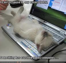 Cat crash