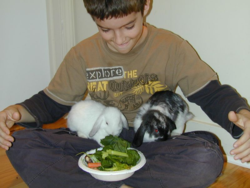 Boy with bunnies