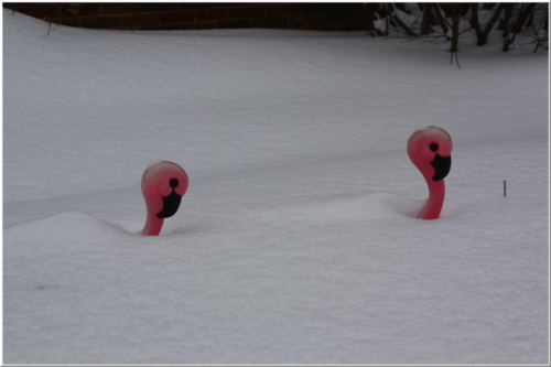 Flamingo snow